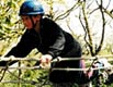 Wythenshawe - Youth Network tree climbing